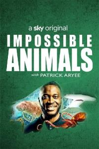 Poster Impossible Animals